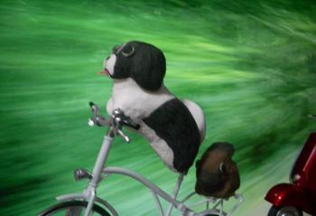 cycle-2.JPG